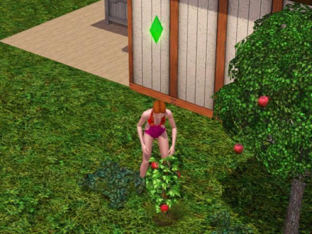 Colette's first garden
